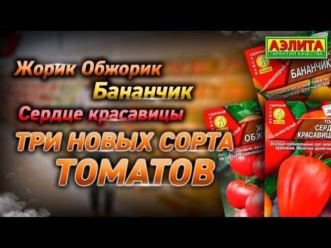 Описание сорта томата победитель и его характеристики