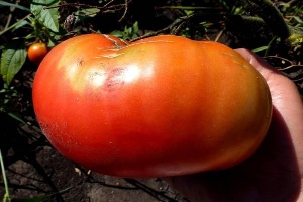 Серия томатов король рынка f1