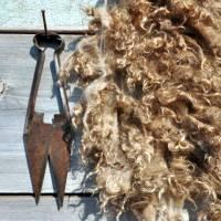 Ножницы для стрижки овец: разновидности и как выбрать, сколько стоят