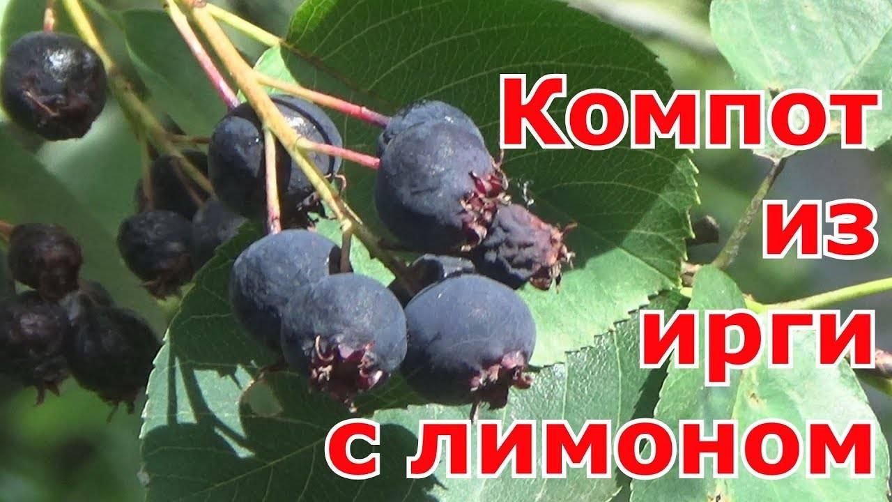 Компот из винограда на зиму на 3 литровую банку: рецепты как приготовить с фото и видео