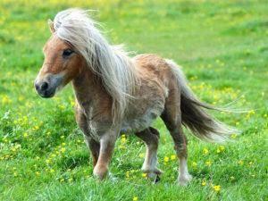 Методы диагностики и ликвидации сапа лошадей