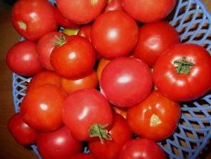 Небольшая ода восхваления урожайному раннему томату взрыв