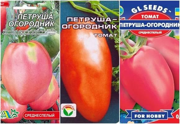Характеристика, урожайность и описание сорта томата «петруша огородник» с фото