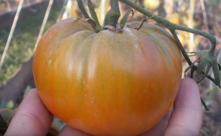 С грядки с любовью: сердцевидные сорта томатов с фото и описанием