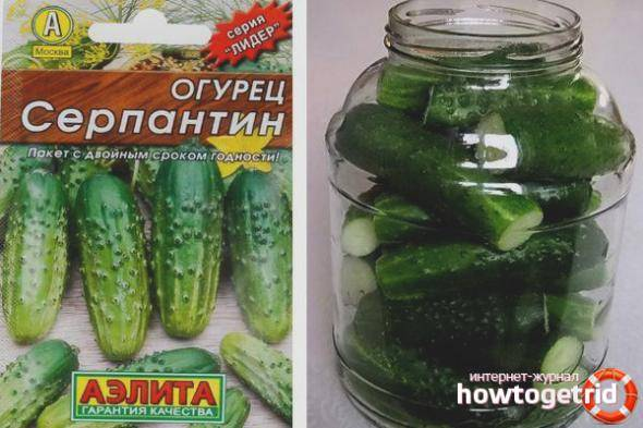 Огурец серпантин — описание и характеристика сорта