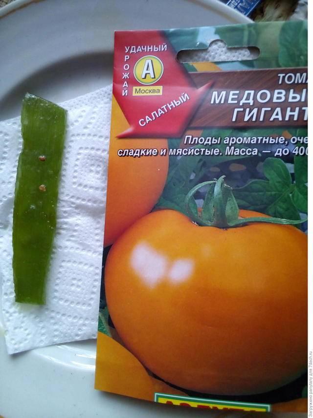 Выращиваем томат «медовый гигант»: характеристики и описание сорта