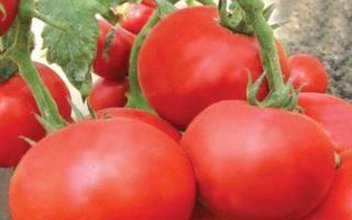 Лучшие сорта безрассадных томатов