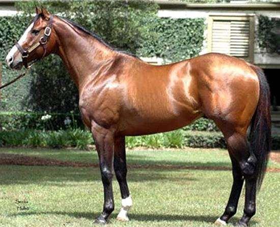 Стоимость самой дорогой лошади в мире, россии