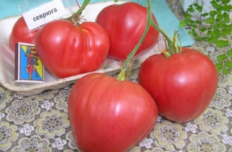 Обзор сортов томатов сибирской селекции: характеристики и фото