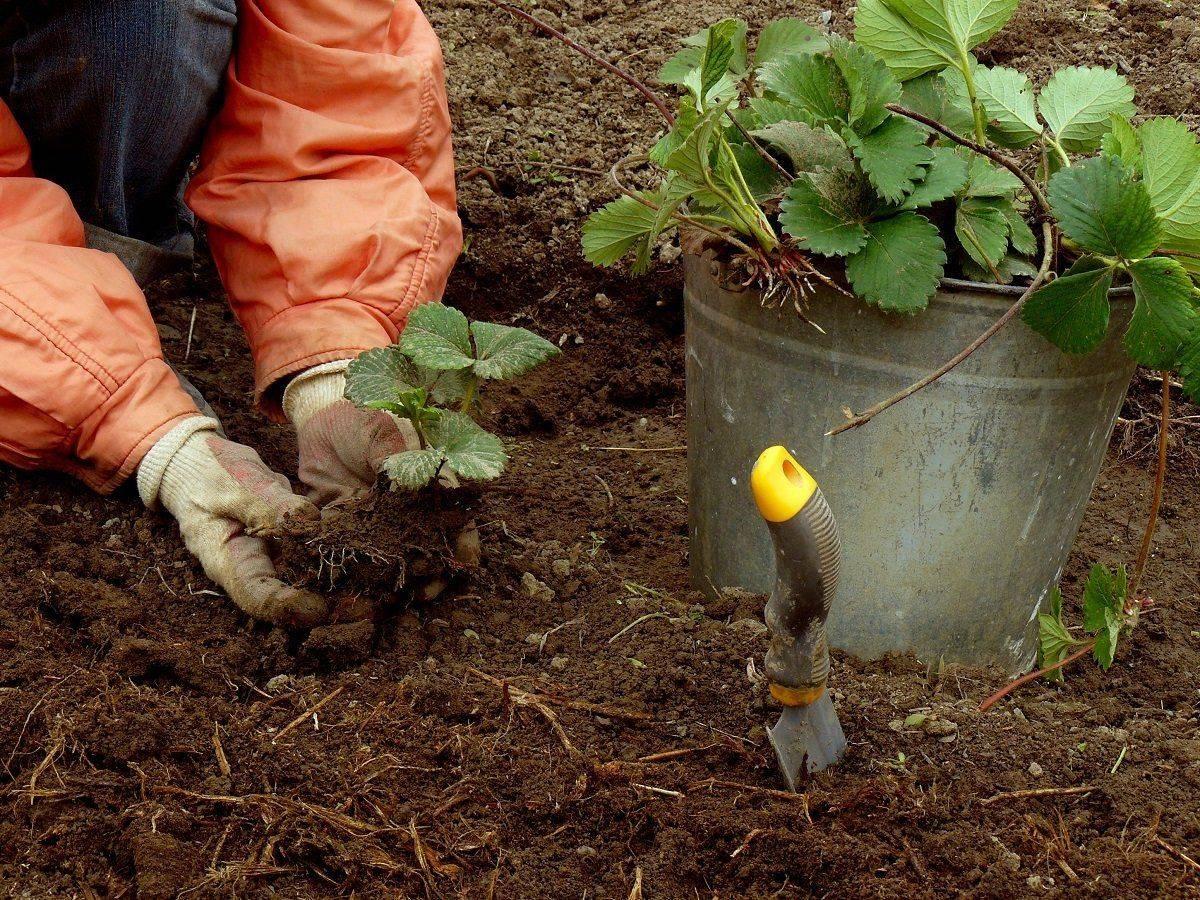 Удобрение нитрофоска: состав, свойства, применение для растений