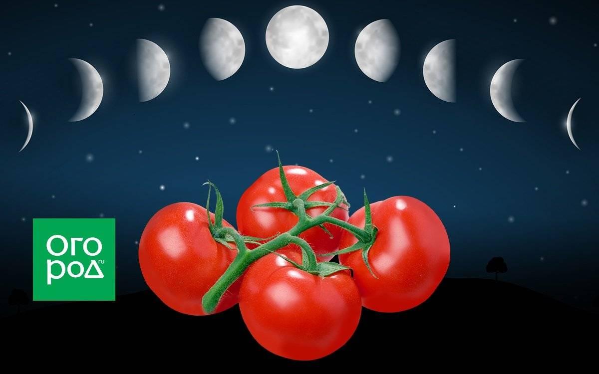 Когда можно пересаживать помидоры в апреле 2020 года в грядки и в теплицы по лунным фазам