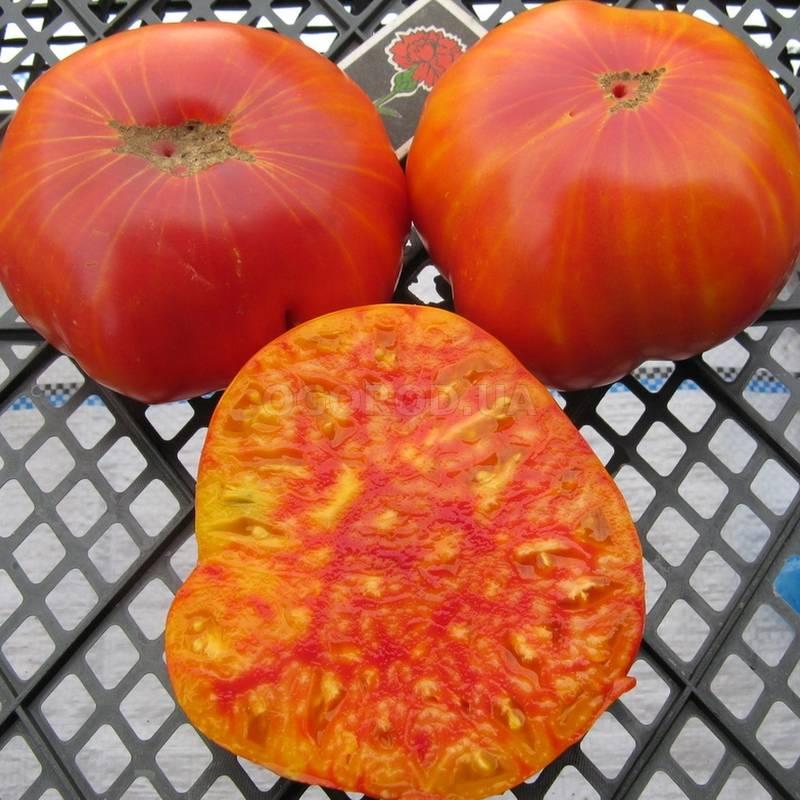 Характеристика и описание сорта томата Мамонт, его урожайность
