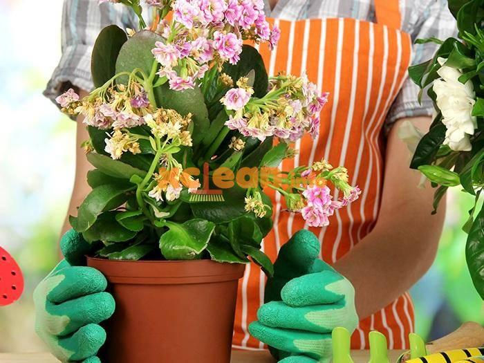 Как избавиться от мошек в комнатных цветах химическими и народными средствами