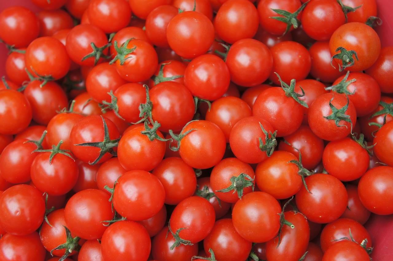 Выращивание сорта томатов «львович f1»