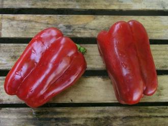 10 лучших сортов сладкого перца для теплицы