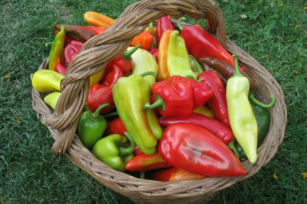 Удобрения для перца при выращивании