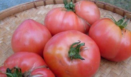 Описание крупноплодного томата медовый гигант и выращивание рассады