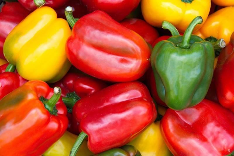 Что можно сажать после перца: список овощных культур
