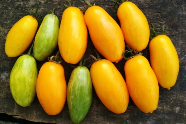 Томат банановые ноги: описание сорта и особенности выращивания
