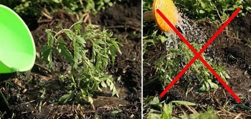 Как вырастить огурцы в теплице?