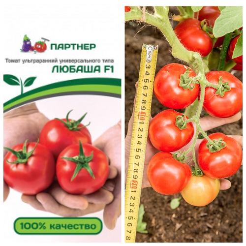 Как вырастить богатый урожай томата любаша