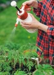 Секреты опытных дачников — опрыскивание томатов йодом: цель обработки и пошаговое руководство по её проведению