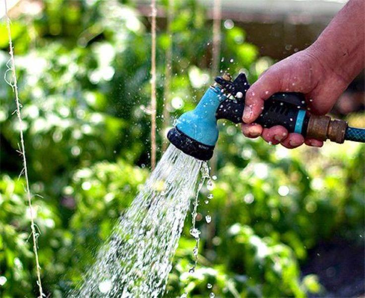 Как поливать огурцы в теплице из поликарбоната
