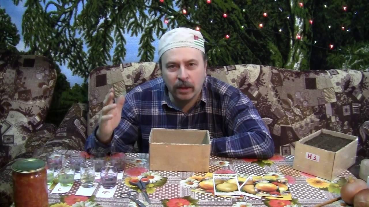 Лук чернушка: выращивание из семян