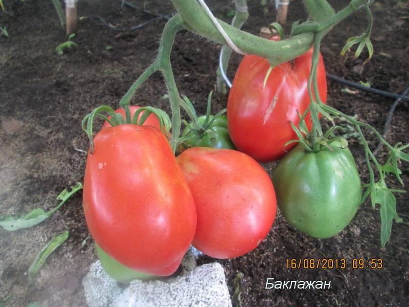 Сорт томата «царский подарок»: фото, отзывы, описание, характеристика, урожайность