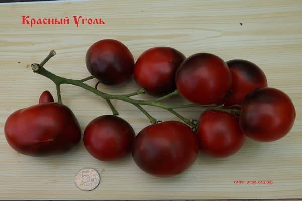 Описание сорта томата Красный уголь, его характеристика и урожайность