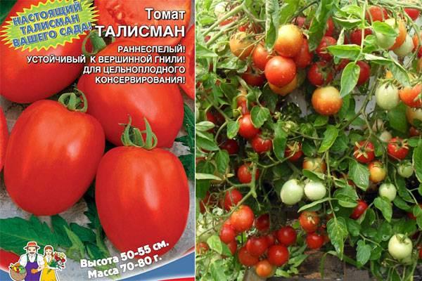 Простой в уходе сорт с медовыми плодами — томат турмалин: отзывы и описание