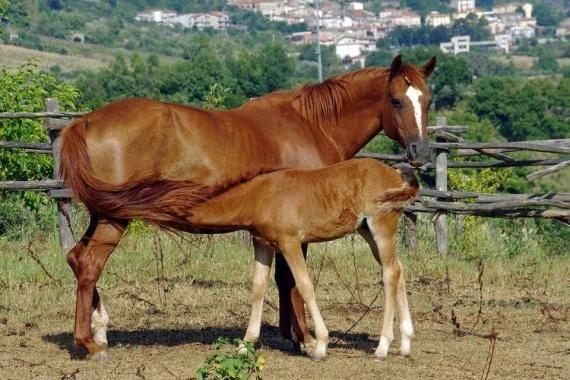 Описание и названия пород лошадей