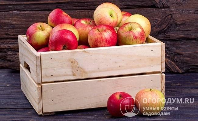 Как сохранить яблоки на зиму в домашних условиях
