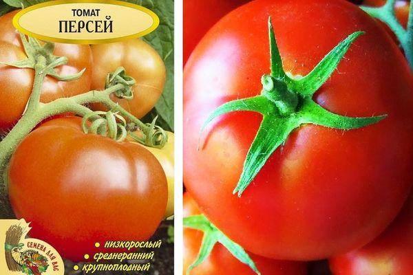 Описание и фото томата персей, урожайность сорта
