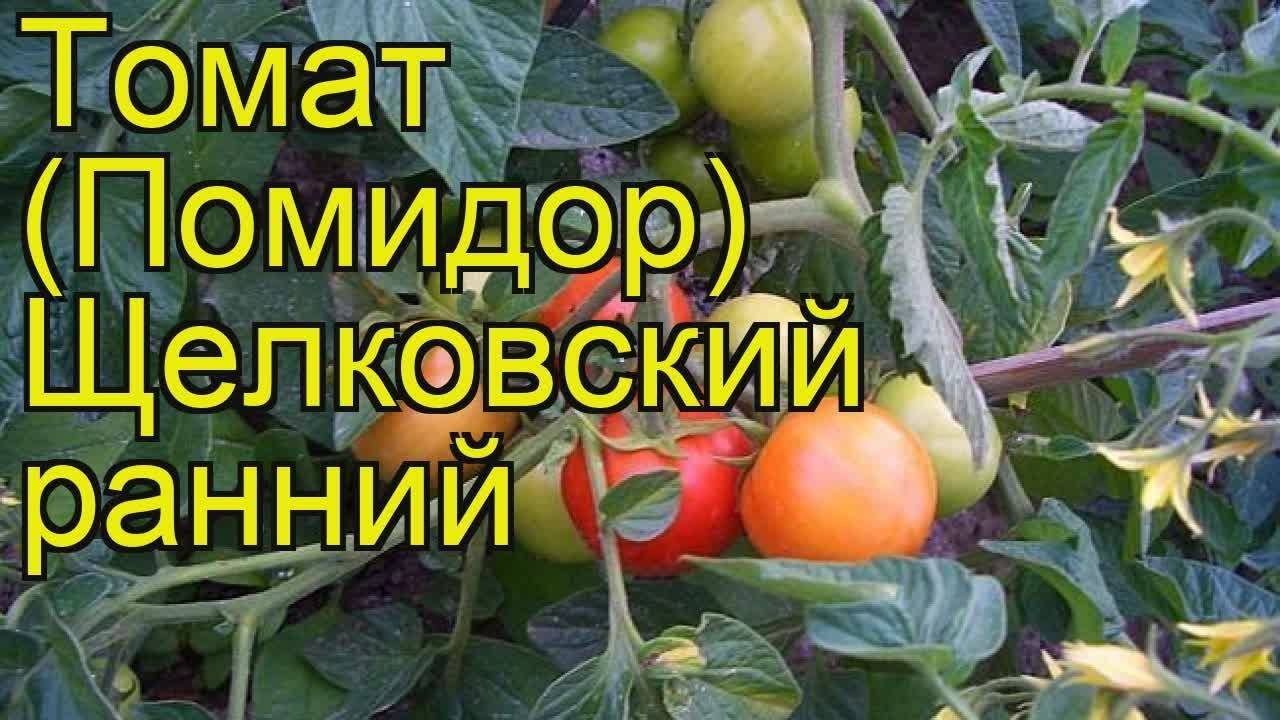 Щелковский ранний – один из лучших детерминантных сортов помидоров