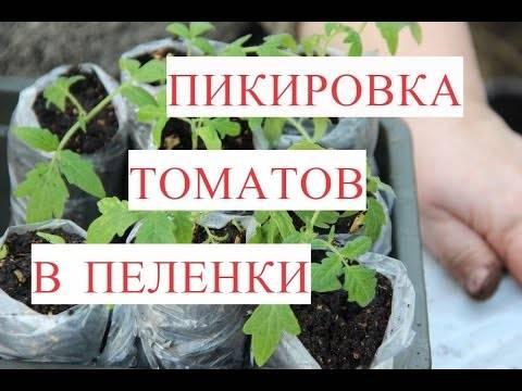 Пикировка рассады томатов