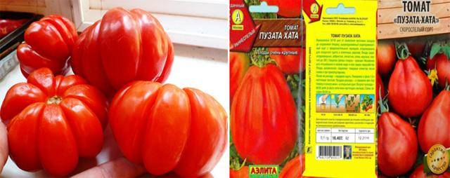 Особенности выращивания, описание и характеристика томата пузата хата