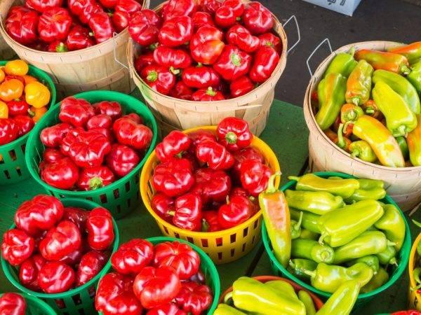 Перец «бычок»: востребованный сорт с высоким качеством плодов