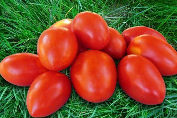 Один из лучших сортов — томат шансон f1: описание и характеристики, отзывы об урожайности