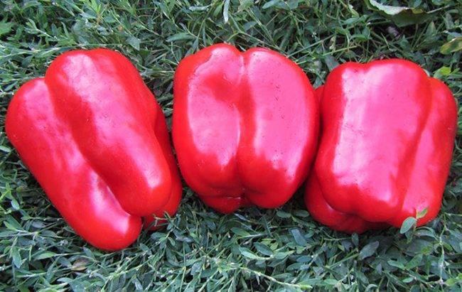 Характеристика и описание сорта перцев геркулес