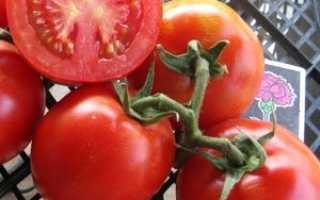 Высокоурожайный и терпимый к недостатку влаги — сорт томата «титаник» f1