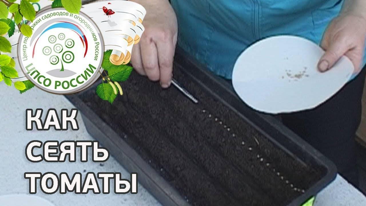 Советы «урожайного огорода татьяны», когда и как сеять томаты