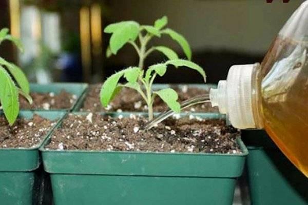 Применение йода для подкормки и защиты растений – лучшие народные рецепты