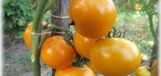 Томат поцелуй (партнёр) – описание сорта, характеристика, урожайность, отзывы, фото