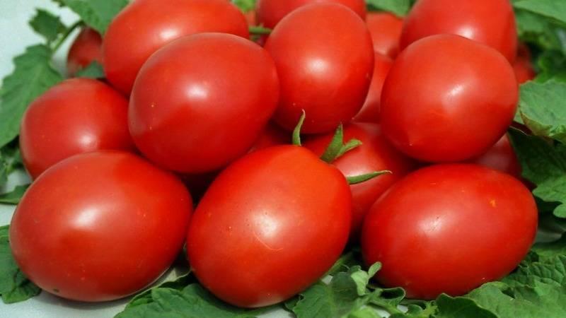 Сорт томатов «валентина»: описание, характеристика, урожайность, фото и видео