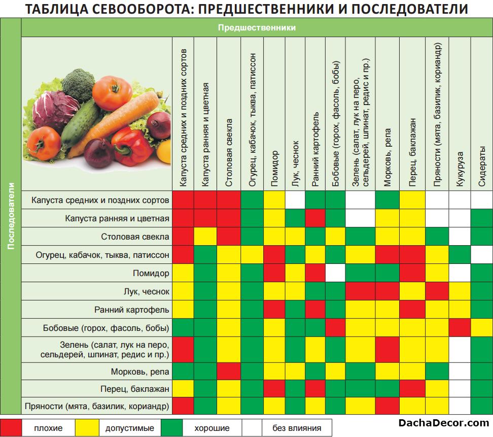 Что можно посадить после кабачков и огурцов и с чем их совместить