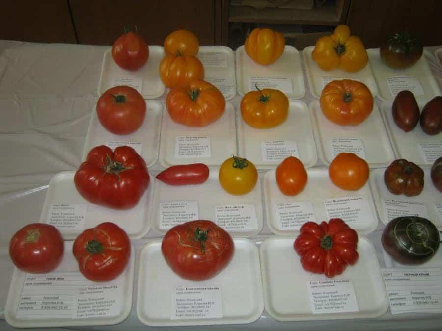 Архив метки: томаты