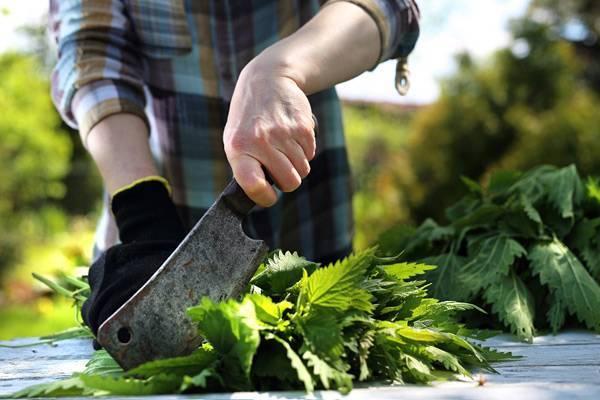 Удобрение из крапивы: зеленая подкормка растений