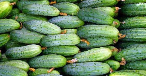 Огурец маринда f1: особенности сорта и технология выращивания