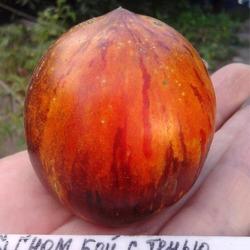 Характеристика и описание сорта томата веселый гном, его урожайность